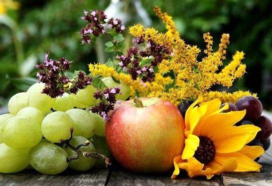 Альтернатива медицині здоров'я та краса без ліків