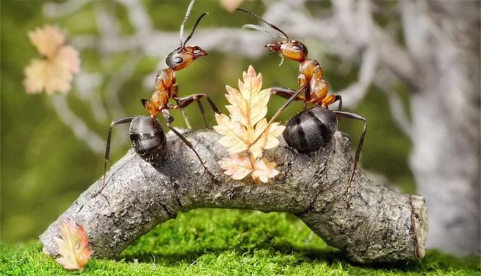 Боротьба з мурахами на городі народними засобами