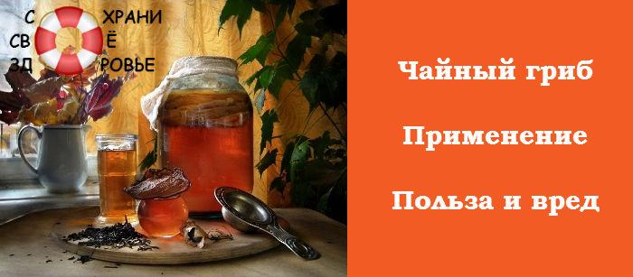 Корисні властивості чайного гриба і протипоказання застосування