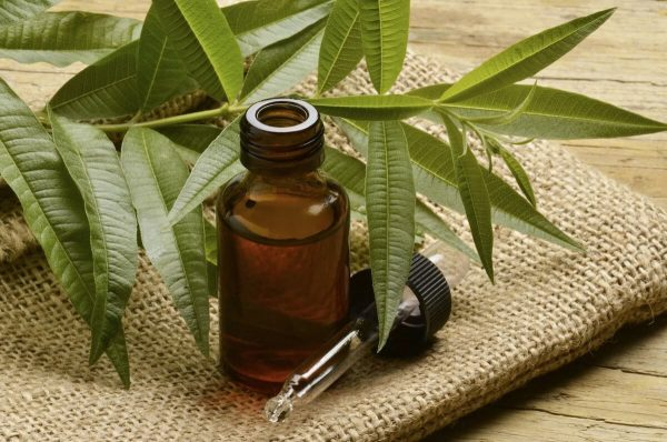 Користь і шкода касторової олії для волосся, шкіри, обличчя