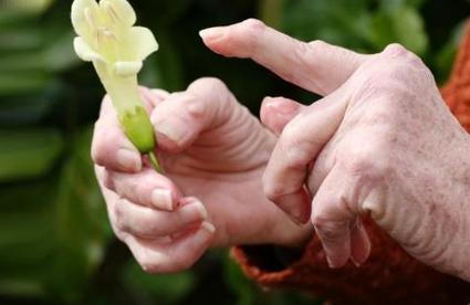 Лікування ревматоїдного артриту народними засобами і харчуванням