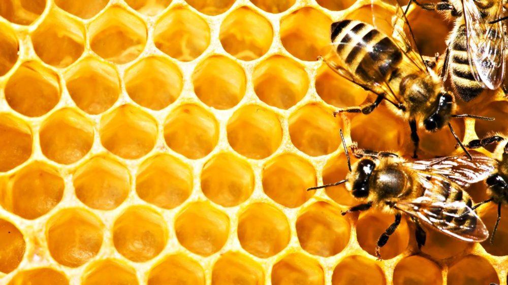 mozhna sti med u sotah razom z voskom 1 - Можна їсти мед у сотах разом з воском