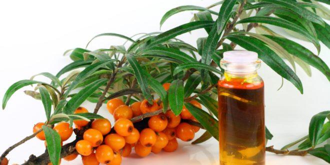 Обліпихова олія при ерозії шийки матки – методи лікування та відгуки