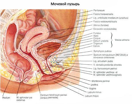 Підготовка та проведення цистоскопії уретри і сечового міхура