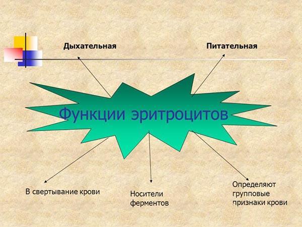 p dvischeniy vm st eritrocit v u krov prichini d agnostika l kuvannya 1 - Підвищений вміст еритроцитів у крові причини діагностика лікування