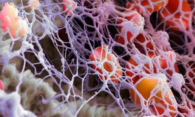 Підвищення тромбоцитів народними засобами