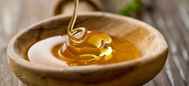 Падевий мед: що це таке, користь і шкода