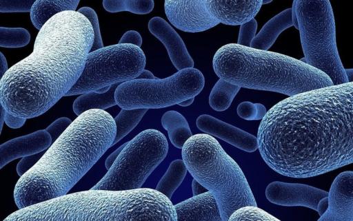 Паличка Коха – до якої групи бактерій належить, як передається, як гине?