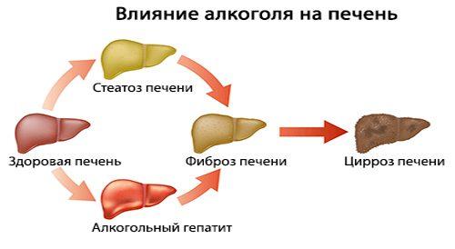 Печінка лікування і профілактика народними засобами