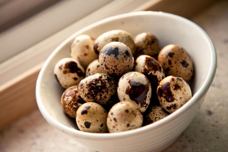 Перепелині яйця: їх користь і шкода для організму людини
