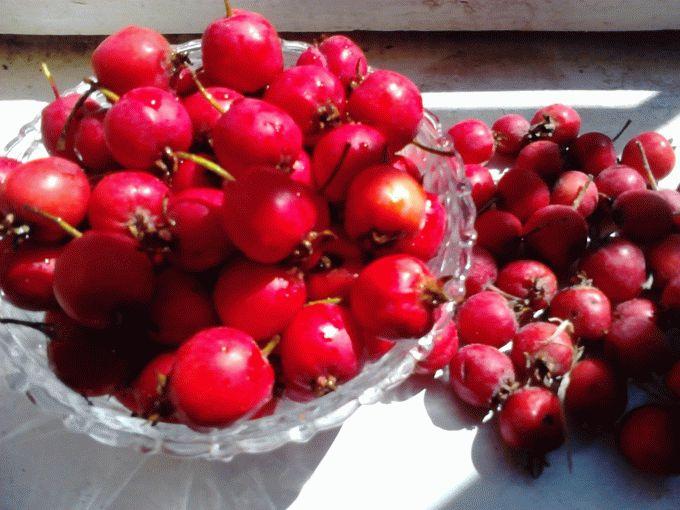 Що можна приготувати з ягід глоду