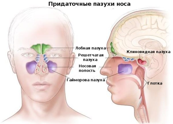 scho znachit pazuhi nosa pnevmatizirovany 1 - Що значить пазухи носа пневматизированы