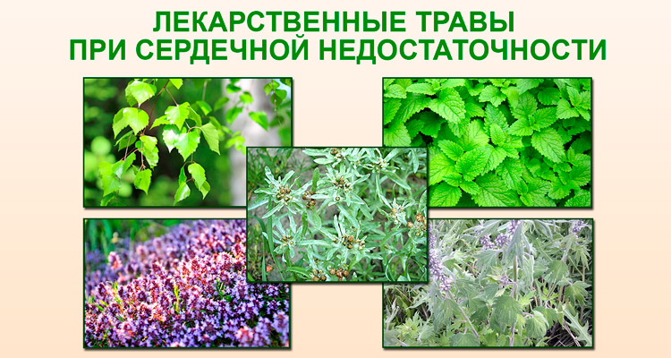 serceviy kashel l kuvannya narodnimi zasobami 1 - Серцевий кашель лікування народними засобами