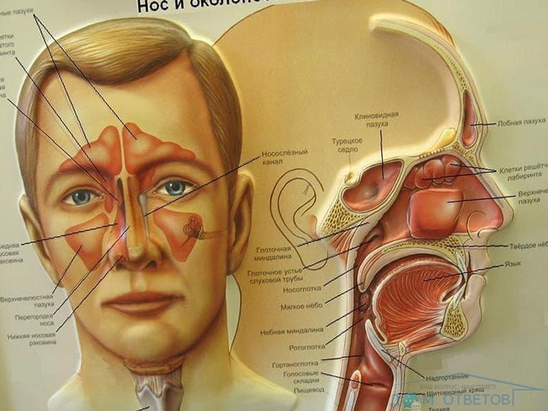 simptomi ta l kuvannya etmo ditu u d tey doroslih 1 - Симптоми та лікування етмоїдиту у дітей і дорослих