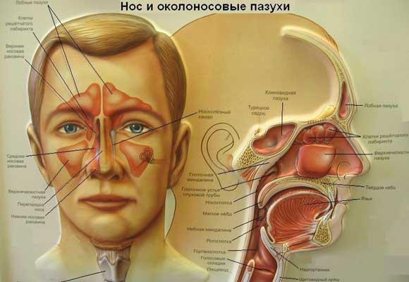 simptomi ta l kuvannya kataral nogo gaymoritu sinusitu u doroslih d tey 1 - Симптоми та лікування катарального гаймориту синуситу у дорослих і дітей