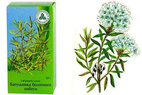 Трави від кашлю для дітей і дорослих