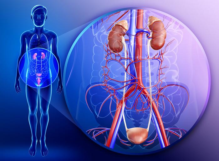 tuberkul oz sechovogo m hura prichini simptomi l kuvannya 1 - Туберкульоз сечового міхура — причини, симптоми і лікування