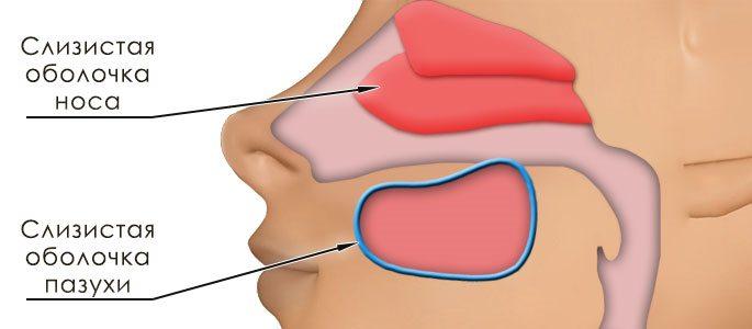 v dm nnost sinusitu v d rin tu ta nshih lorzabolevaniy 1 - Відмінності синуситу від риніту та інших лорзаболеваний