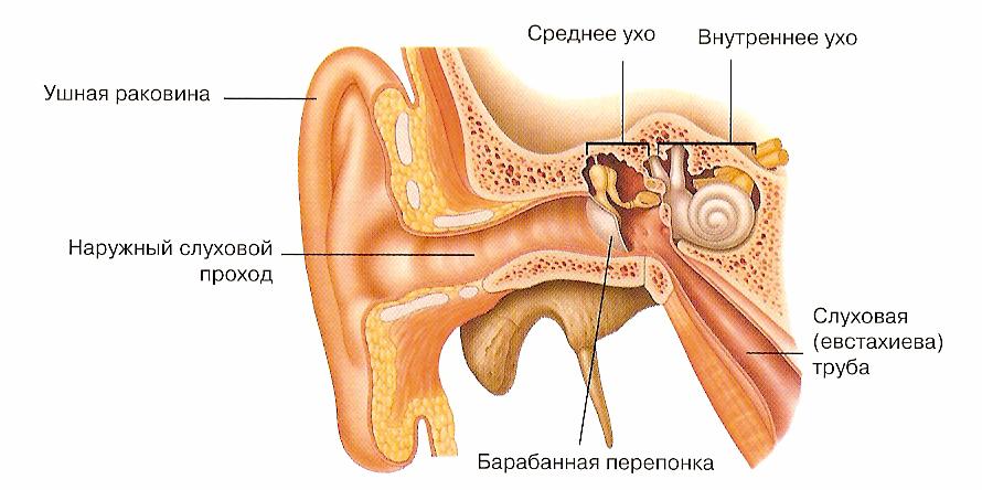 vidi krapel dlya l kuvannya otitu u doroslih 1 - Види крапель для лікування отиту у дорослих