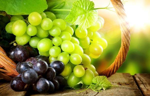 vinograd korist shkodu dlya zdorov ya 1 - Виноград користь і шкода для здоров'я