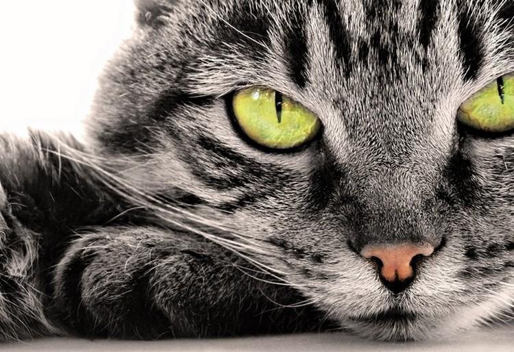 Як коти і кішки лікують людей які виліковують хвороби кішки