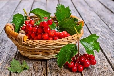 Як приготувати ягоди калини від кашлю та застудних захворювань в домашніх умовах