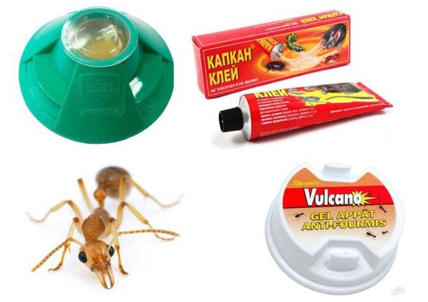 Як вивести домашніх мурашок з квартири