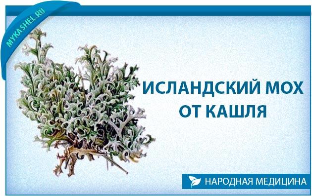 yak zavaryuvati slands kiy moh v d kashlyu 1 - Як заварювати ісландський мох від кашлю