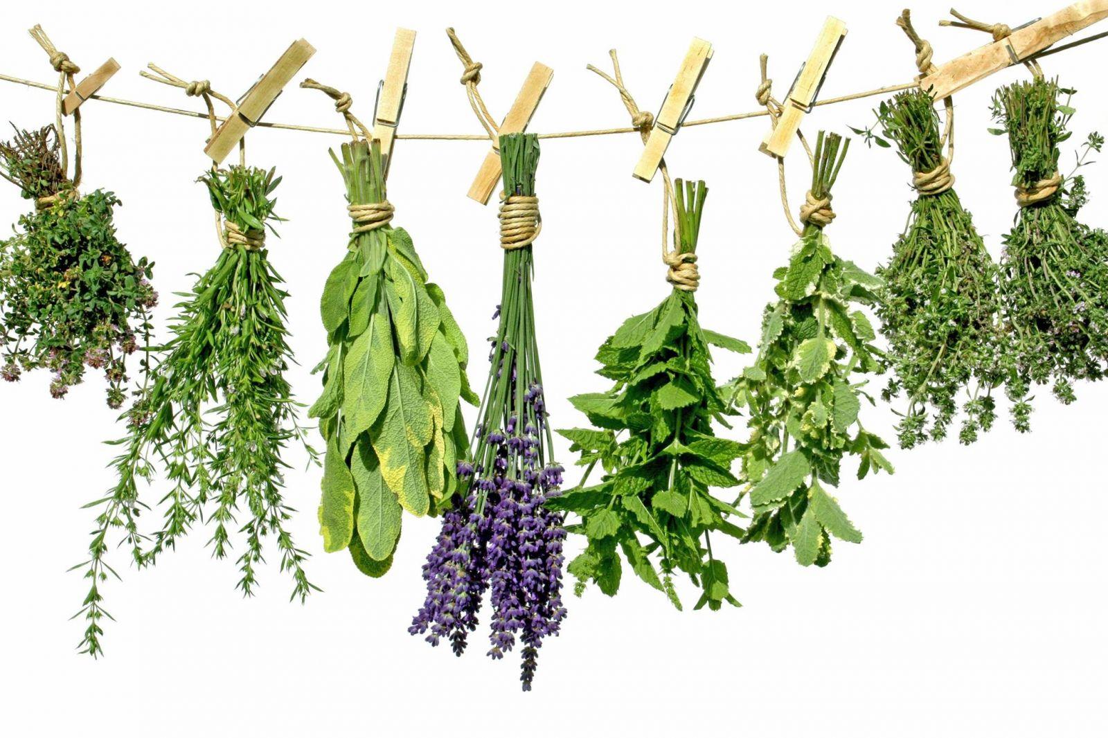 Якими травами полоскати горло при застуді і ангіні