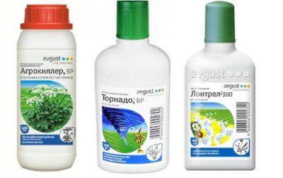 Зірочник трава корисні властивості і застосування зірочника Зірочник середній звичайна злакова ланцетоподібна