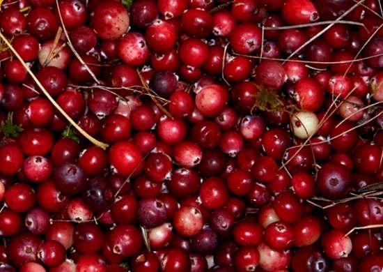 Журавлина корисні властивості і протипоказання ягоди