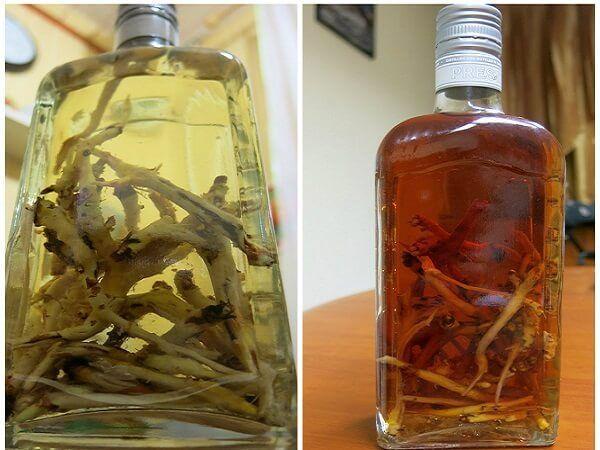 Золотий корінь(трава) – корисні властивості і застосування золотого кореня, настій і настоянка золотого кореня