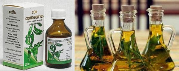 Золотий вус застосування настоянки на горілці у лікуванні суглобів тощо